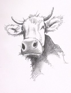cow with attitude