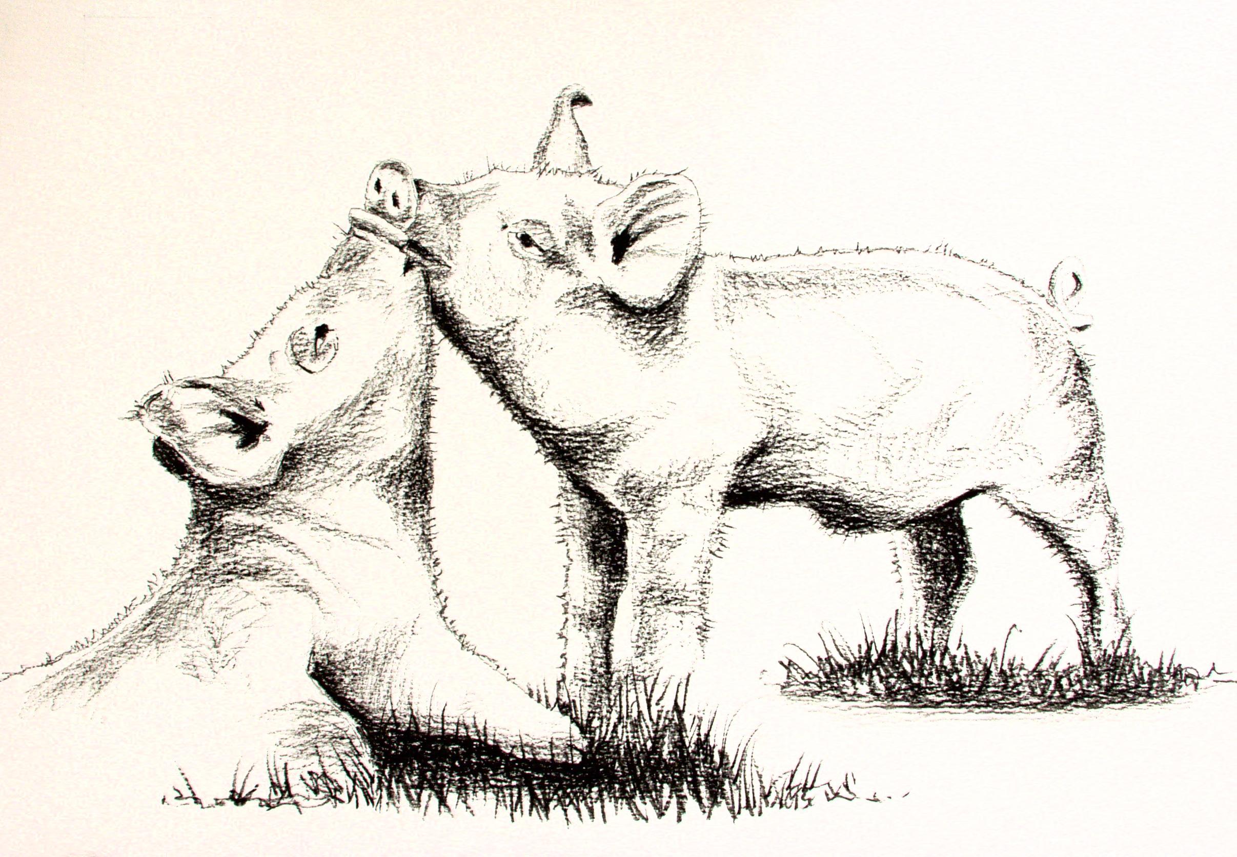loving pigs