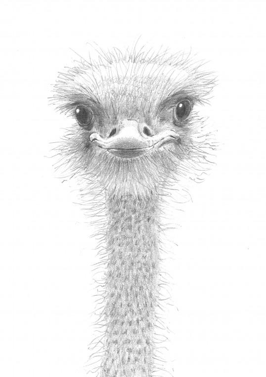 Drawings Old David Smith Art